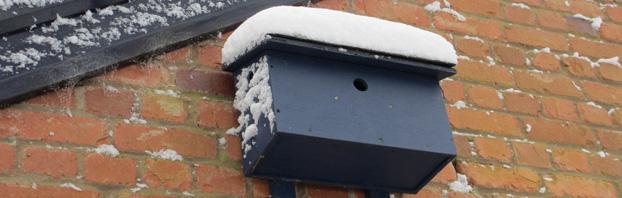 Debbie_Cooke_Creative_Garden_Design_Wildlife_in_the_Winter_Garden_Sparrow_Terrace_Snow