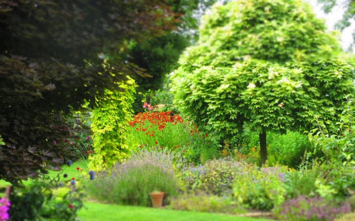 Garden_Consultation_DebbieCooke.com