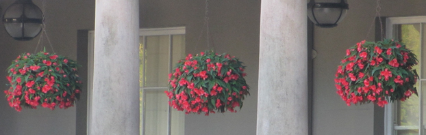 Hanging_Baskets_Debbie_Cooke_Creative_Garden_Design_Want_to_know_how_to_Keep_em_Blooming