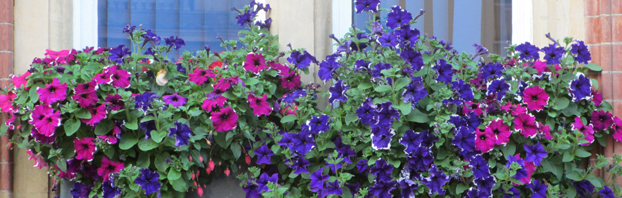 Window_Box_Debbie_Cooke_Creative_Garden_Design_Want_to_know_how_to_Keep_em_Blooming